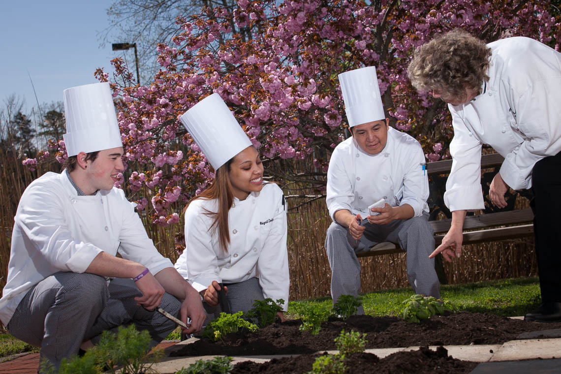 chefs learning to harvest garden